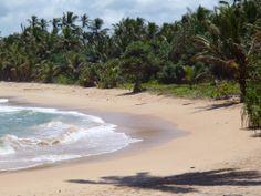 Wild Beach Signs Of Life, Sri Lanka, Beach, Water, Outdoor, Inspiration, Beautiful, Gripe Water, Outdoors