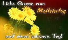 Good Morning, Humor, Happy, Plants, Night, Picture Day, Labor Day, Pentecost, Buen Dia