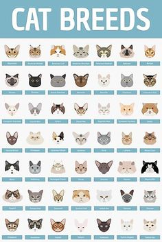 Promising reduced cat training kittens pop over to this web-site Cat Age Chart, Cute Cats, Funny Cats, C Is For Cat, Chesire Cat, Cat Info, Cat Behavior, Cat Facts, Warrior Cats