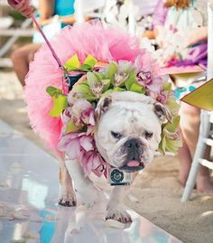 Including your pup in the wedding? Attached a GoPro camera around her neck for a dog's eye view of the ceremony! | photo by Amy Bennett Photography