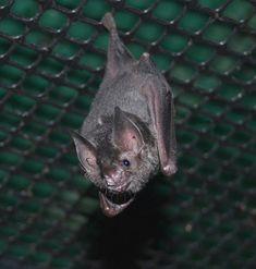 Lil Drac at Bat World Sanctuary