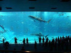 I love aquariums and see life! The breathtaking scene in Okinawa Churaumi Aquarium in Ocean Expo Park