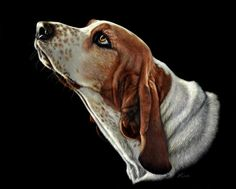Heather Lara ~ hound scratchboard painting ~ made by scratching away the ink with a sharp tool.  Several layers of a diluted ink wash are added during the scratching process to build up color and contrast.