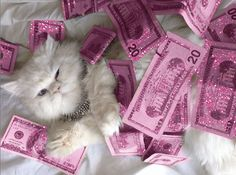 This cat is living it up. <3