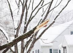 After the summer growth cycle has ended—once trees have entered their dormant period—inspect trees for overgrown limbs that may pose a potential danger.