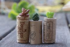 DIY Succulent Wine Cork Planters A lowly crafting staple finds stylish new life. Wine Cork Projects, Wine Cork Crafts, Wine Bottle Crafts, Diy Projects, Succulent Planter Diy, Succulents, Suculentas Diy, Recycled Wine Corks, Idee Diy