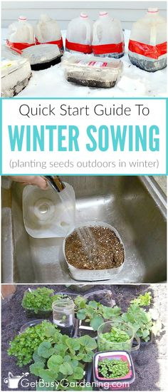 Have you heard of winter sowing yet? The winter sowing method is a way of planti. Have you heard of winter sowing yet? The winter sowing method is a way of planting seeds outside during the winter in milk jug greenhouses, and the se. Heating A Greenhouse, Greenhouse Gardening, Greenhouse Ideas, Growing Seeds, Growing Plants, Gardening For Beginners, Gardening Tips, Gardening Services, Container Gardening