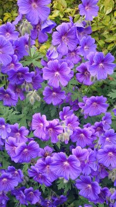 Stunning purple flowers. Raebattesonart