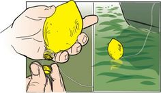 Lemon Float  Lemon-shaped juice containers make great floats for the big baits used when fishing for stripers or catfish. Loosen the cap, wrap your line around the screw threads, then tighten the cap. The bright yellow really stands out on the water.