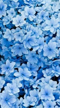 blue | flowers | wallpaper | nice