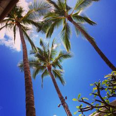 ヤシの木#ハワイ Apple Watch 3, Oceans, Palm Trees, Hawaii, Surfing, Tropical, Beach, Flowers, Plants