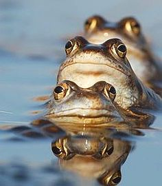 Synchronized Swimmers - #Frogs