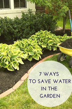 Simple ways to help conserve water in your garden!