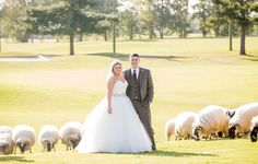 Sheep at Wedding | It All Started With A Kiss | Lana and Stephen Tie the Knot at the Hermitage Golf Course with photos by Matt Andrews Photography | The Pink Bride®️ www.thepinkbride.com