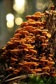 agglomerato di funghi...