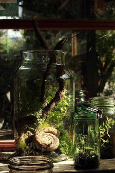 natural-magics: Hermetica shoot 171 by Ken Marten