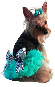 Black with Teal Ruffles Dog Dress