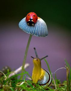 Ladybug (Ladybird) on toadstool or mushroom & Snail Beautiful Creatures, Animals Beautiful, Cute Animals, Beautiful Bugs, Amazing Nature, Bugs And Insects, Tier Fotos, Belleza Natural, Nature Animals