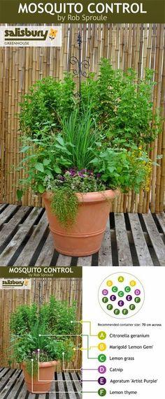 Mosquito Control container so you can sit and unwind in the evenings without dousing in DEET. Perfect for my deck!  You can get the materi...