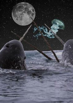 and narwhal