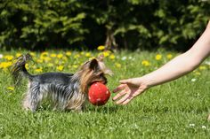 Playing Fetch by Filip Susanek on 500px