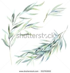 BRANCH Watercolor Stock Photos, Images, & Pictures | Shutterstock