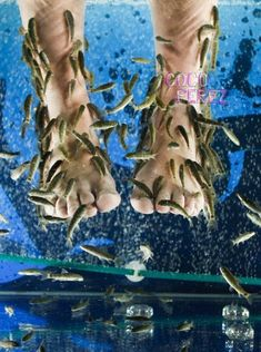 Fish Pedicures Could Cause Wound Infections