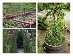 15 creative DIY garden pea trellis
