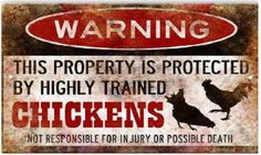 Funny Chicken Signs to make life a little more fun