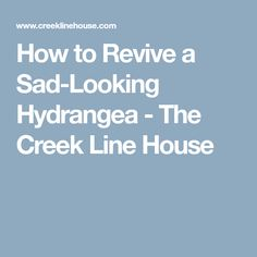 How to Revive a Sad-Looking Hydrangea - The Creek Line House