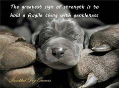 The greatest sign of strength...is to hold a fragile thing with gentleness
