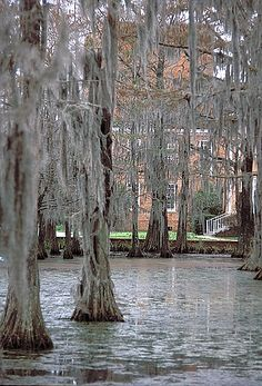 Cypress Lake on the campus of the University of Louisiana at Lafayette