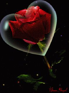 With Tenor, maker of GIF Keyboard, add popular Rose All Day animated GIFs to your conversations. Share the best GIFs now >>> Beautiful Gif, Beautiful Roses, Beautiful Pictures, Beautiful Hearts, Flowers Gif, Pretty Flowers, Hearts And Roses, Red Roses, Gif Kunst