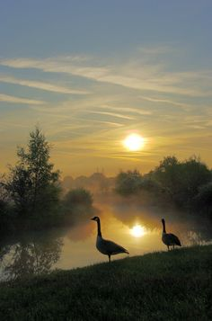 Swan Pool, Sandwell Valley Country Park May 2010 Sunrise at ish, Nice mist accross the pool 2 Canadian Geese Golden Goose 1 Beautiful Birds, Beautiful World, Beautiful Places, Beautiful Pictures, Beautiful Sunset, Beautiful Morning, Simply Beautiful, All Nature, Belle Photo