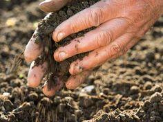 F. Boucourt - Rustica Enrichir la terre - fertilisant à utiliser dans un potager bio