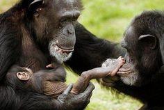 https://flic.kr/p/qWhwEb | Top 50 Cute Animal pics! Click here: … | via Cute Animals ift.tt/1yivqPw