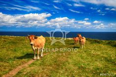 http://www.dollarphotoclub.com/stock-photo/Rural mountain landscape with cows herd/69878173 Dollar Photo Club millions of stock images for $1 each