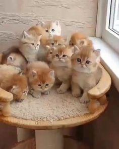 Cute Baby Cats, Cute Little Kittens, Funny Cute Cats, Cute Little Animals, Cute Kittens, Cute Cats And Kittens, Cute Funny Animals, Cute Dogs, Ragdoll Kittens