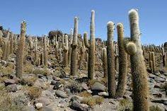 Bildergebnis für pflanzen in der wüste