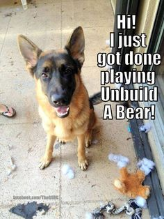 Hehe reminds me of my dogs