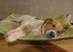 deluxe dog sized beds pet lounge studios bambu cross pet hammock  u0026 reviews   wayfair      rh   pinterest