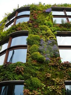 vertical garden and curved windows - I love all the different textures and colors
