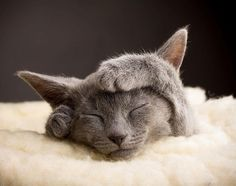 Adorable russian kitten sleeping with her hands on head.. Click the pic for more #aww