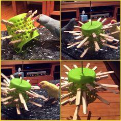 ♥ Pet Bird DIY Ideas ♥ DIY PARROT TOYS - Push half wooden pegs & paddle pop sticks through a small basket.