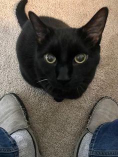 Sophie's Choice, Black Cats, Animals, Animales, Animaux, Animal, Animais