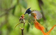 Dad bird feeds baby chick