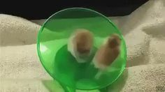 #notetoself try this with our hamsters https://t.co/9YQYNt6sv8