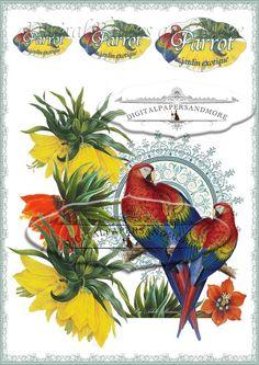 Parrots Digital Sheet-Instant download 3 by Digitalpapersandmore