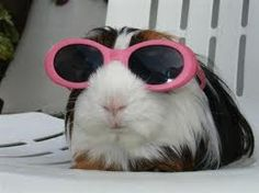 The diva of all guinea pigs!!!
