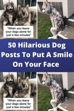 If you've seen one of Bored Panda's earlier lists of the funniest dog posts on the Internet, you know how fast they can fill you up with positive vibes. Clean Funny Jokes, Funny Ads, Silly Jokes, Funny Laugh, Hilarious, Wtf Funny, Funny Memes, Laughing Jokes, Laughing So Hard